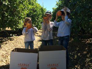 niños orange3